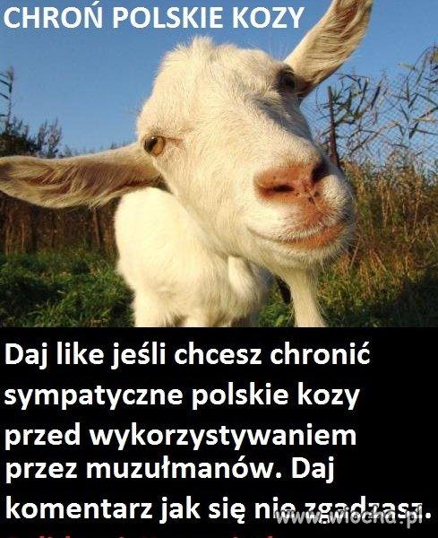 Chro�my polskie kozy