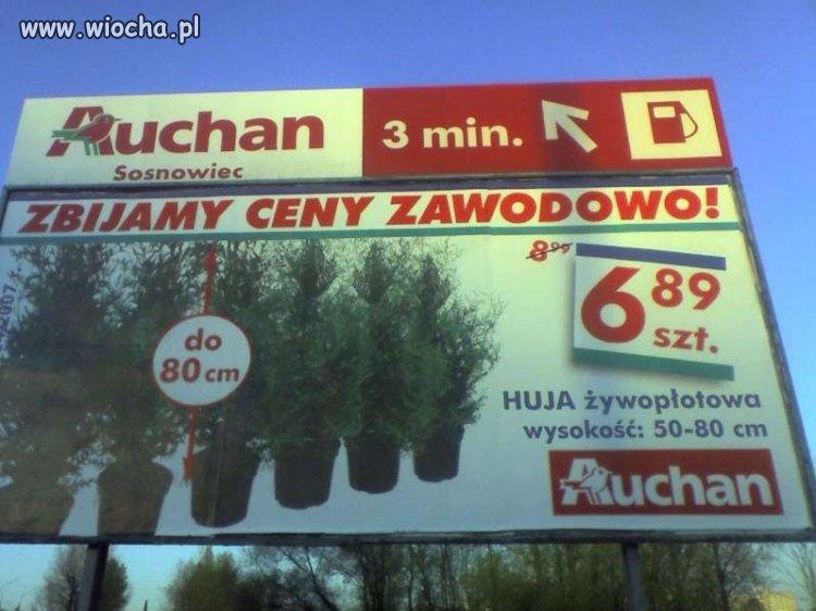 Co można kupić w Auchan Sosnowiec ??