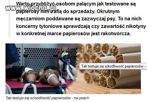 Tak koncerny tytoniowe testują zawartość