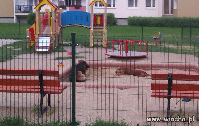 Jak nie umiesz zajmować się psem