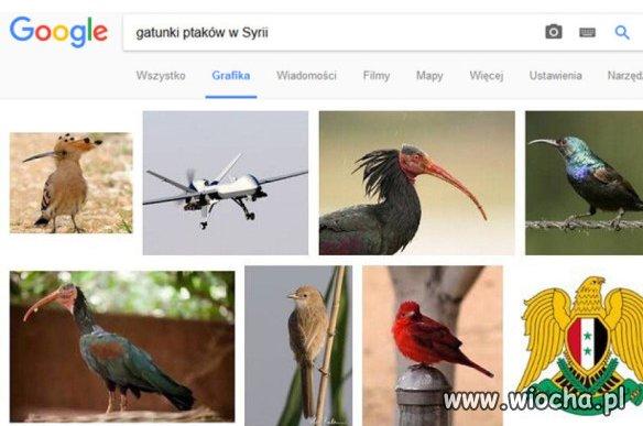 Gatunki ptaków w Syrii