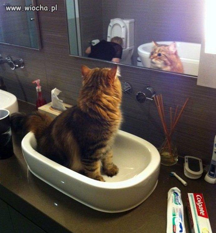Kot sobie myśli:
