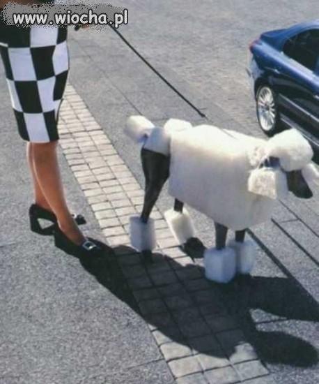 Czy ty zrobiłbyś zwierzęciu coś takiego ?
