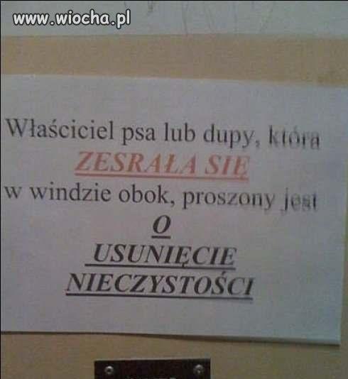 Nieczystość w polskiej windzie / takie rzeczy...
