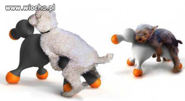 Nowe zabawki dla psów
