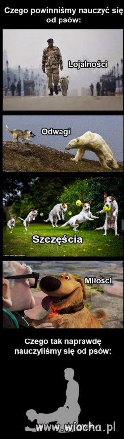 Psy to mądre, wierne i kochane zwierzęta