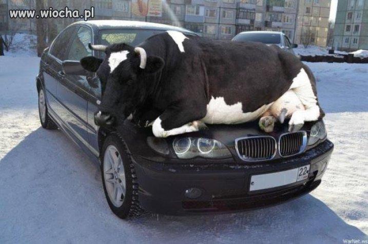 Lans na BMW