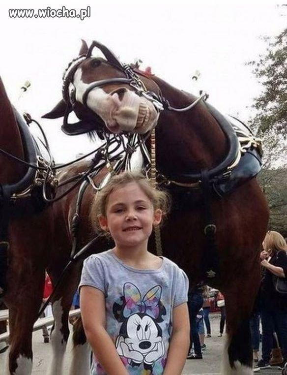 Fotogeniczny koń ...
