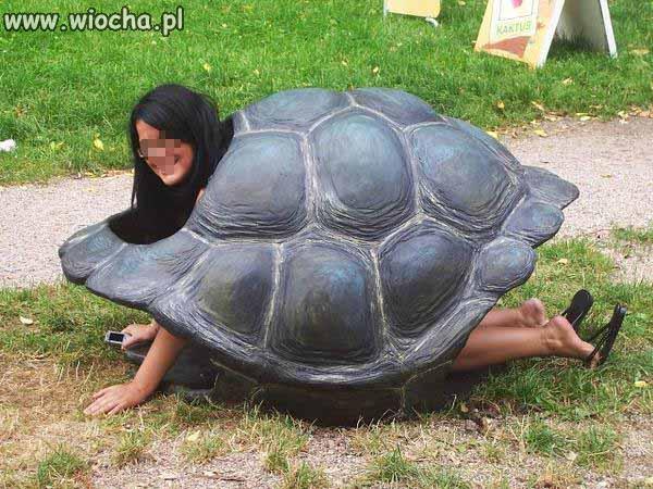 Żółwica.