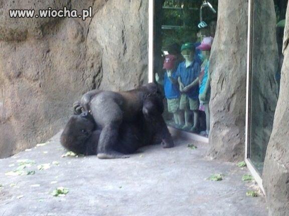 Dzieci zobaczcie jak bawią się małpki
