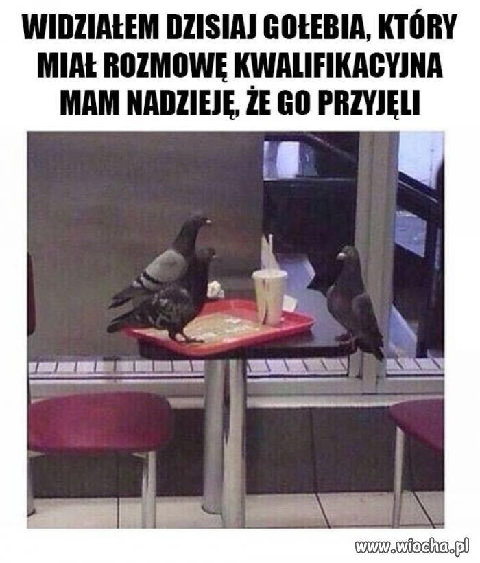 Powodzenia, gołębiu.