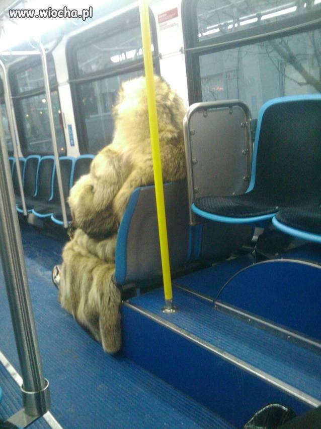 Yeti podróżuje i w tramwaju ...