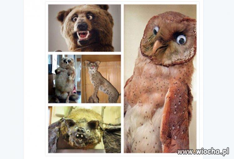 Tak wyglądają biedne zwierzątka, będące w szoku