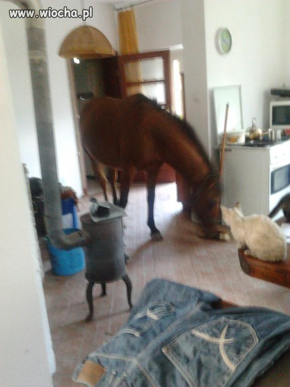 Dobra ..trzymanie konia w stodole to jeszcze ok