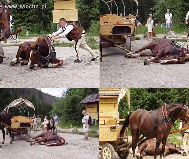 Konie jeżdżące na Morskie Oko mają ciężki żywot...