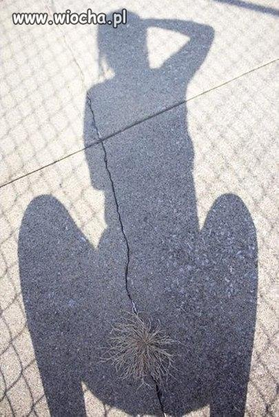 Beata i kępa