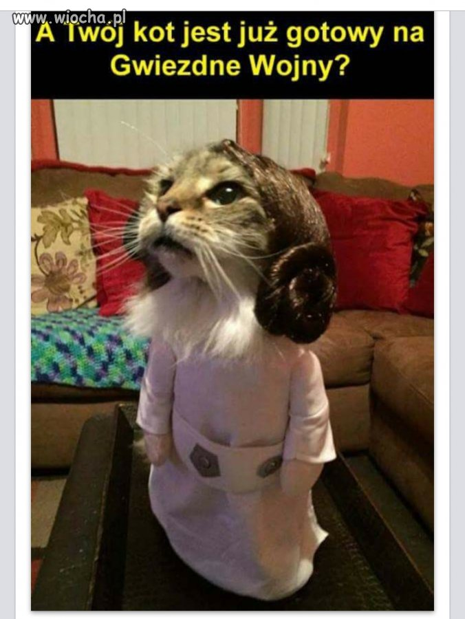 Gwiezdny kot.