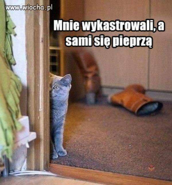 Czyli przemyślenia kotów