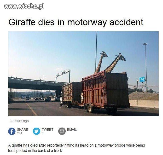 Fotka tuż przed tym jak zderzyły się z mostem