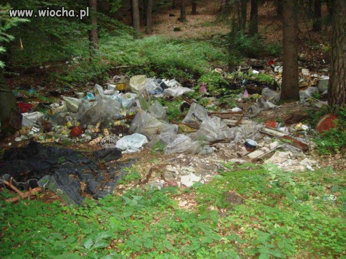 Wiochą jest to, że z lasów robione są śmietniki