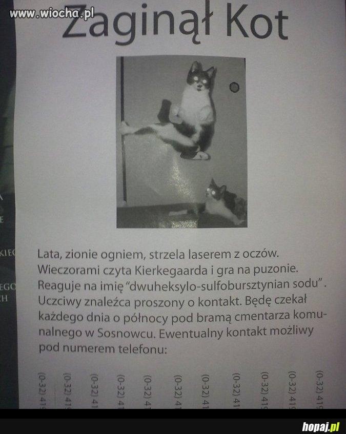 Zaginął Kot!!!