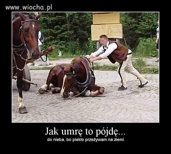 Koń, który padł w drodze do Morskiego Oka
