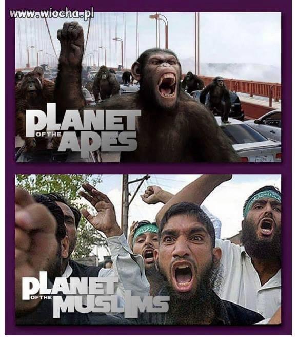 Z szacunkiem dla małp...