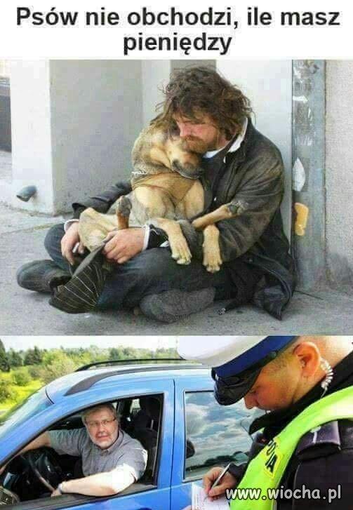 Psów nie obchodzi
