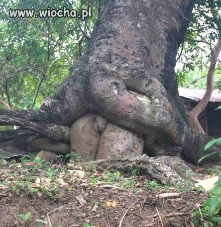 Rośliny potrafią pobudzić wyobraźnie