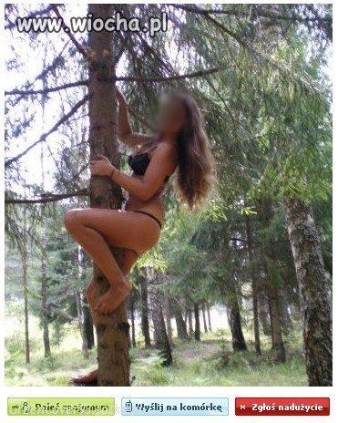 Ssak drzewny