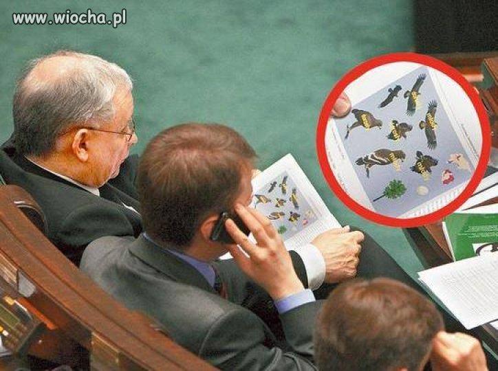 A prezesowi tylko ptaszki w głowie...