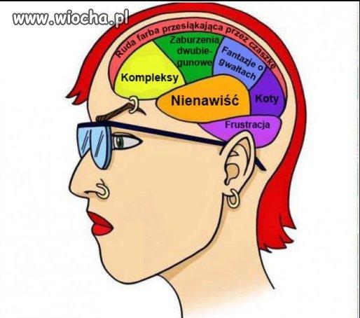 Mózg typowej feministki.