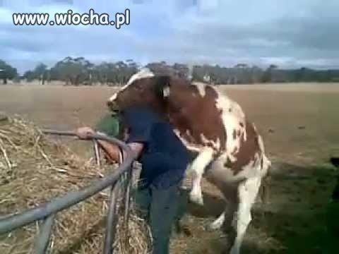 Смотреть видео корова дрючит мужика онлайн.