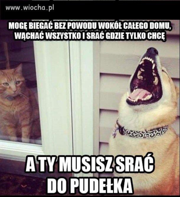 Psy kontra koty