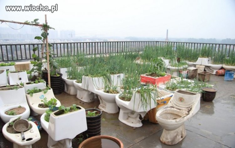 Ogródeczek