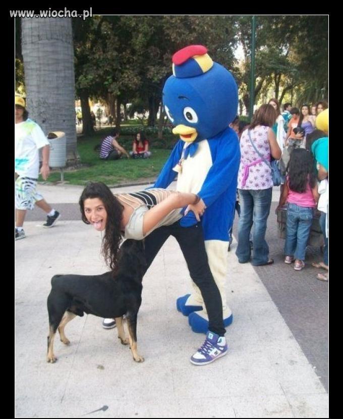 Pies od przodu...