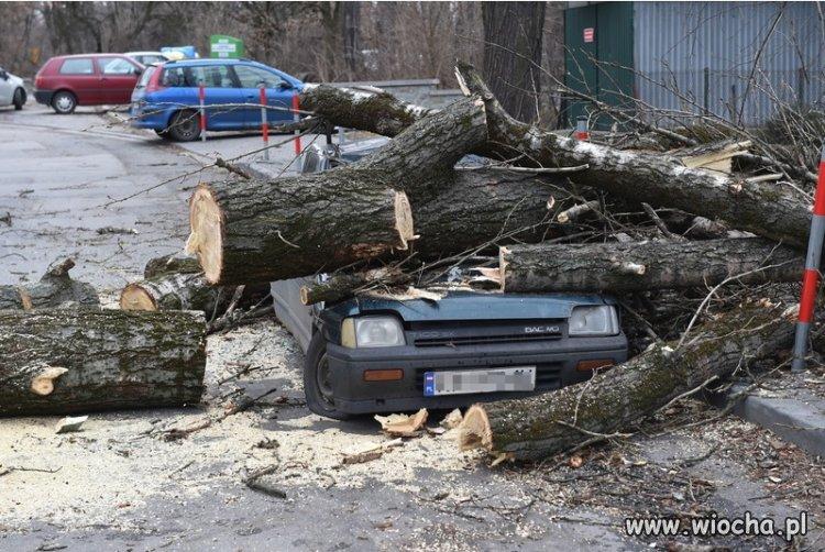 Drzewa kontratakują