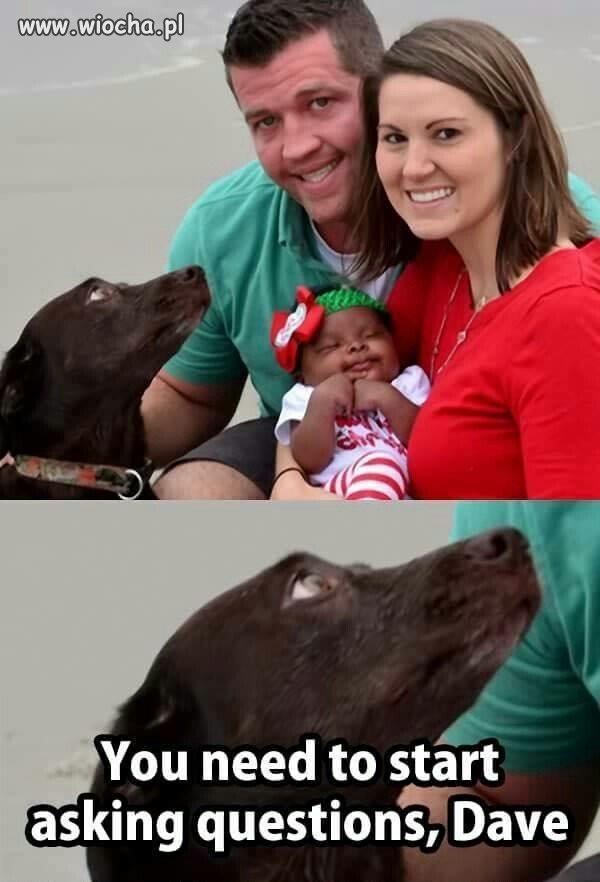 Pies już wie,