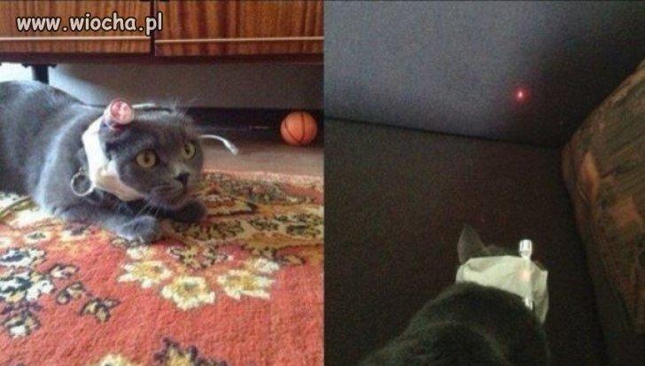 Prosty sposób na wykończenie kota