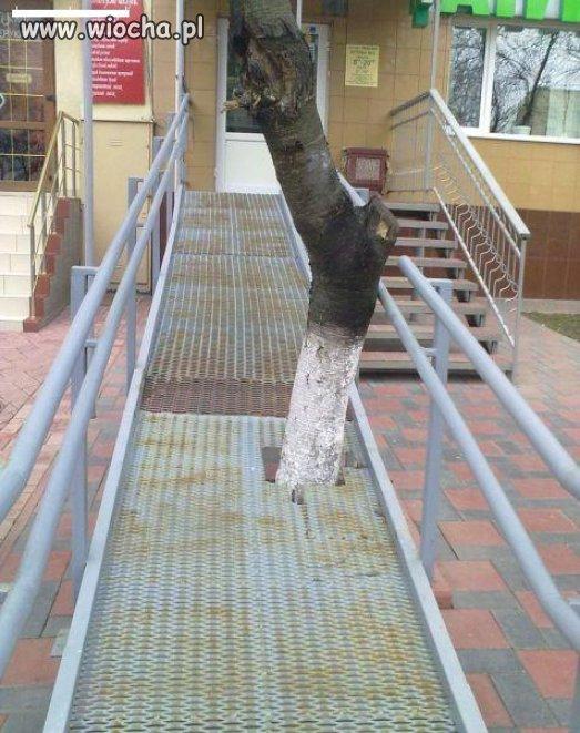 Drzewo jest ważniejsze od ludzi niepełnosprawnych