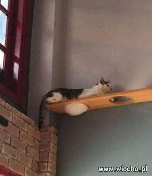 Legowisko koteczka