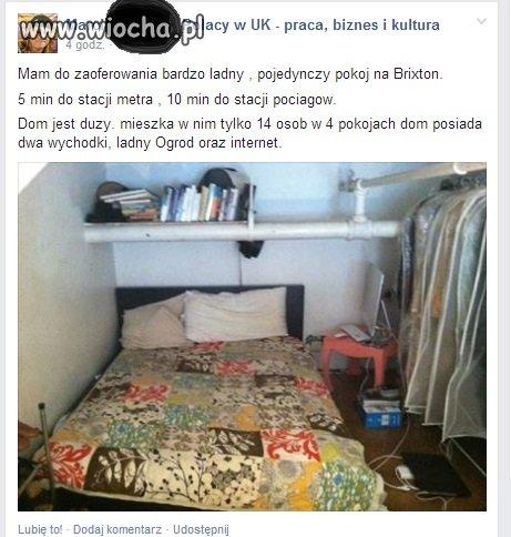 Pokój do wynajęcia - Polacy w UK