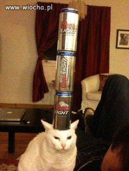 No to sobie kota wyszkolili ...
