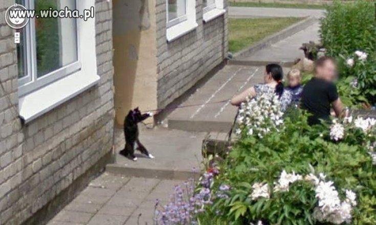 Wyprowadzanie kota.