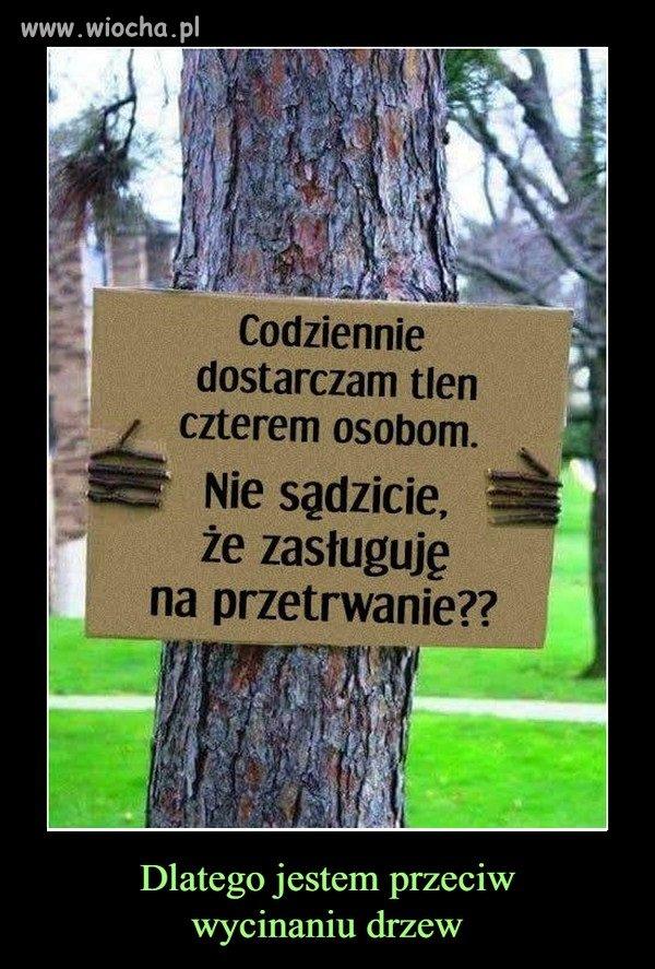 Jestem przeciwny wycinaniu drzew...