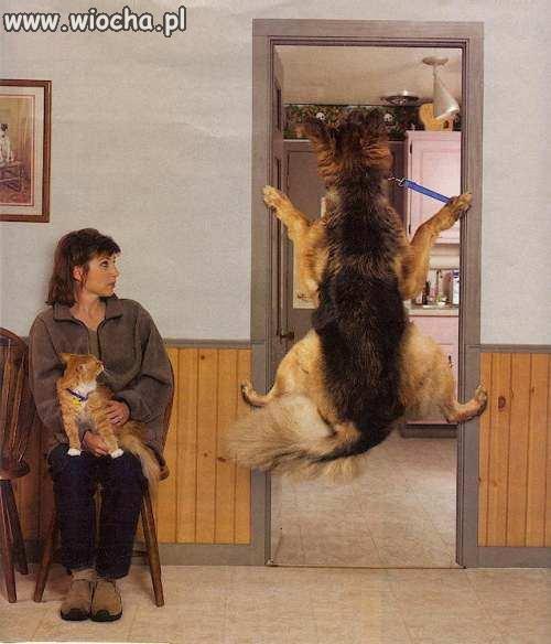 Pies u weterynarza.