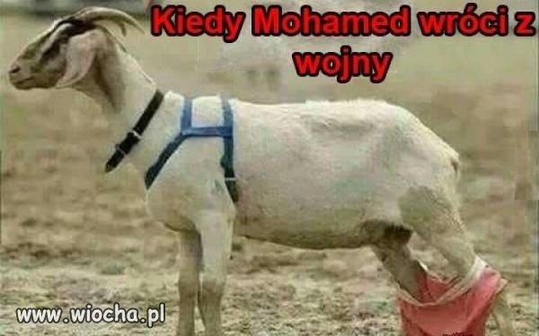 Biedne kozy