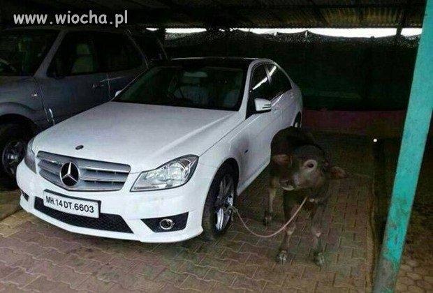 Koleżanka pilnuje auta arabusowi