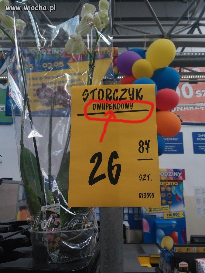 Dzisiejszy hit Castoramy Poznań