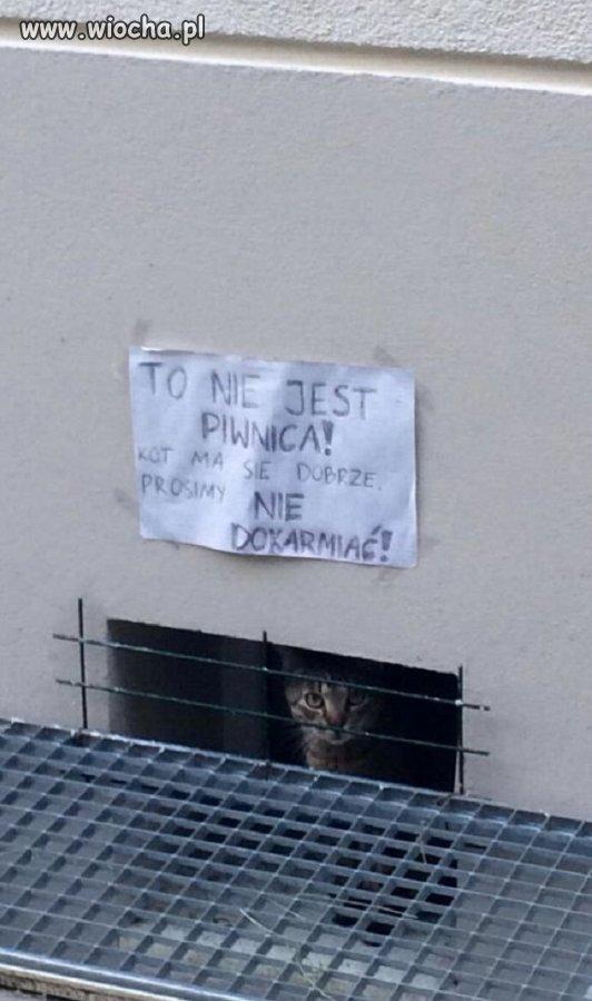 Kot ma się dobrze...?